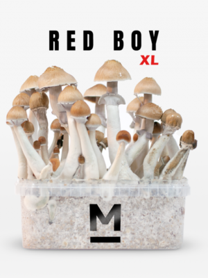 Magic Mushroom Grow Kit Red Boy XL by Mondo®